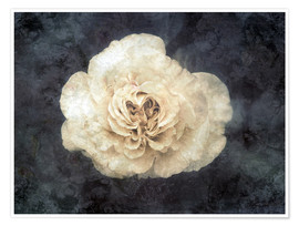 Premium poster White rose superimposed with floral texture