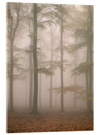 Acrylic glass  Morning mist in the forest - Thonig