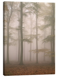Canvas  Morning mist in the forest - Thonig