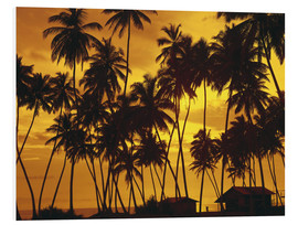 Forex  Beach huts under the palm trees - Thonig