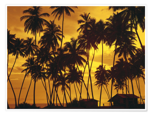 Premium poster Beach huts under the palm trees