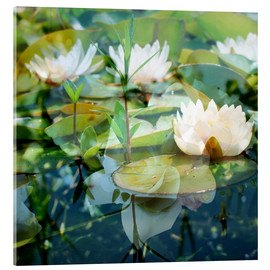 Acrylic glass  Montage of white water lilies - Alaya Gadeh