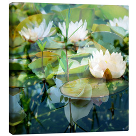 Canvas  Montage of white water lilies - Alaya Gadeh