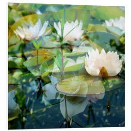 Forex  Montage of white water lilies - Alaya Gadeh