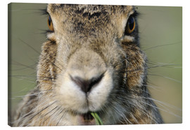 Canvas print  Hare in close-up - Ronald Wittek