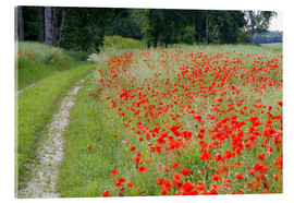 Acrylic print  Dirt road at the poppy field in Traunstein - Alfons Rumberger