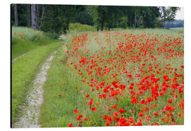 Aluminium print  Dirt road at the poppy field in Traunstein - Alfons Rumberger