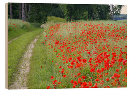 Wood  Dirt road at the poppy field in Traunstein - Alfons Rumberger