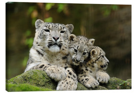 Canvas  Mother with pups, Irbisse - David & Micha Sheldon