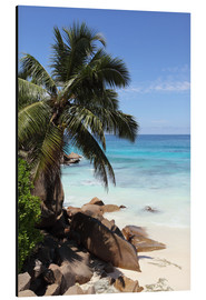 Aluminium print  Palm beach in the Seychelles - Catharina Lux