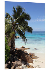 Foam board print  Palm beach in the Seychelles - Catharina Lux