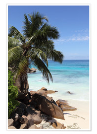 Premium poster  Palm beach in the Seychelles - Catharina Lux