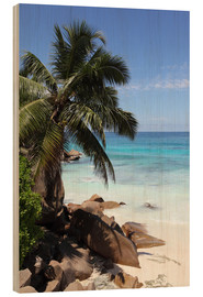 Wood  Palm beach in the Seychelles - Catharina Lux