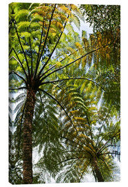 Canvas print  Palm roof in Marlborough Sound, New Zealand - Catharina Lux
