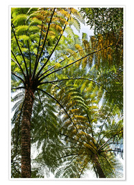 Premium poster  Palm roof in Marlborough Sound, New Zealand - Catharina Lux