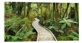 Acrylic print  jungle trail - Rainer Mirau