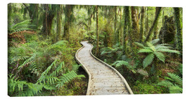 Canvas print  jungle trail - Rainer Mirau