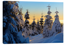 Canvas print  Snow-covered spruce trees at sunrise on Wurmberg in the Harz - Andreas Vitting