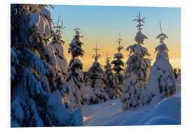 Foam board print  Snow-covered spruce trees at sunrise on Wurmberg in the Harz - Andreas Vitting