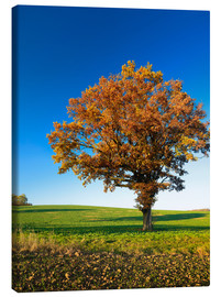 Canvas print  Lonely oak tree in autumn - Andreas Vitting
