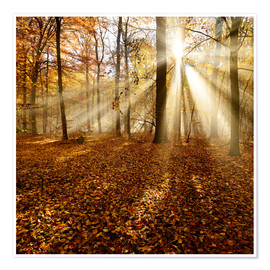 Premium poster  Sunrays and morning fog - Andreas Vitting