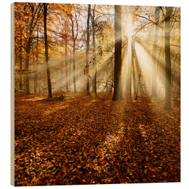 Wood  Sunrays and morning fog - Andreas Vitting