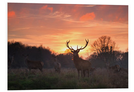 Foam board print  Deer in Richmond Park - Alex Saberi