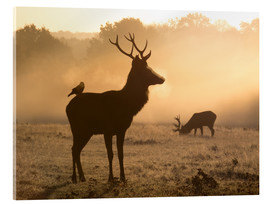 Acrylic print  Deer and jackdaw in the fog - Alex Saberi