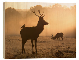 Wood  A Red deer with Western jackdaw in London Richmond Park - Alex Saberi