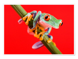 Poster  Tree frog on red