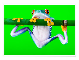 Premium poster  colorful frog on green