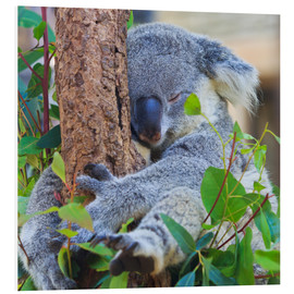 Foam board print  Koala Hugging Tree