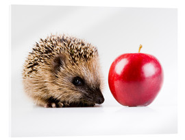Acrylic print  Hedgehog and apple