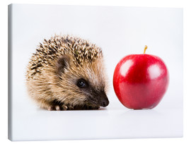Canvas print  Hedgehog and apple