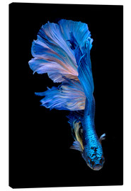 Canvas  magnificent blue fish