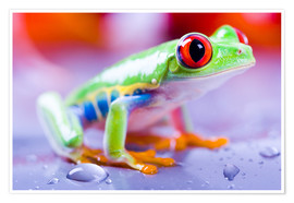 Premium poster colorful frog