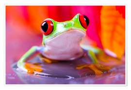 Premium poster little green frog