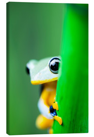 Canvas print  yellow tree frog