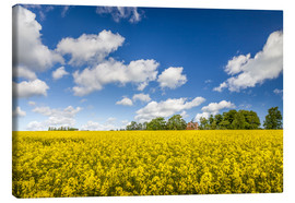 Canvas  Spring in yellow and blue on Bornholm - Christian Müringer