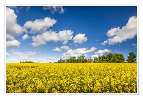 Premium poster Spring in yellow and blue on Bornholm