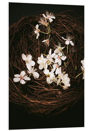 Foam board print  Cherry Blossoms in Nest - Sybille Sterk