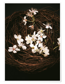 Premium poster Cherry Blossoms in Nest