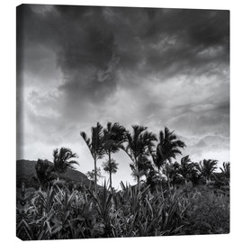 Canvas  A stormy tropical scene in paradise of Brazil. - Alex Saberi