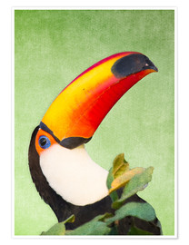 Premium poster A colourful toucan bird on a tropical background.