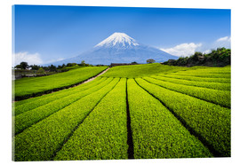 Acrylic glass  Tea plantation with Mount Fuji in Shizuoka, Japan - Jan Christopher Becke