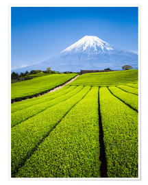 Premium poster  Tea Plantation and Mount Fuji in Shizuoka, Japan - Jan Christopher Becke