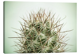 Canvas print  Small cactus, long spikes