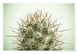 Premium poster  Small cactus, long spikes