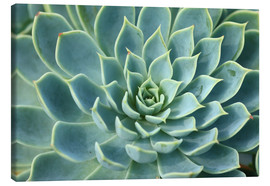 Canvas print  Magnificent succulent