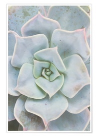 Premium poster  Pale Green Plant